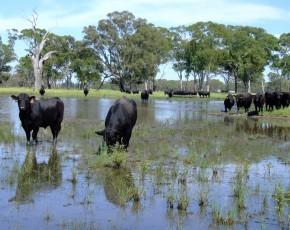bulls-wetland-3